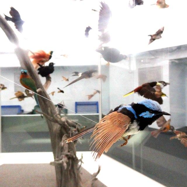 ROM_Bird_2_sm